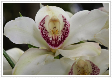 Orchid, NYBG
