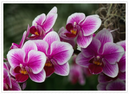 Orchids, NYBG