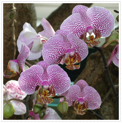 Orchids, NYBG ©